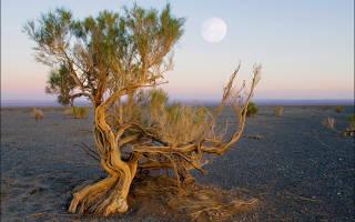 Растительность пустыни России
