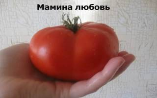 Мамина любовь томат
