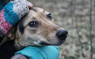 Токсоплазмоз от собаки