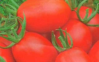 Хайпил томат отзывы