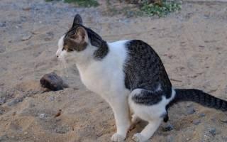 У котенка слизь в кале