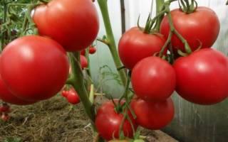 Любовь и помидоры