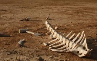 Почему животные вымирают