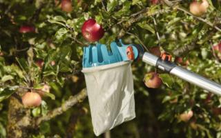 Для сбора яблок приспособление