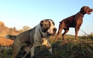 Ошейник с отслеживанием для собак