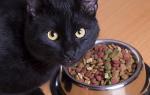 Кошка после родов плохо ест