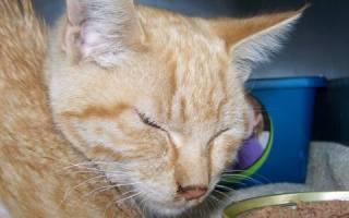 Как вызвать аппетит у кошки