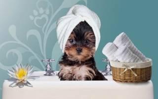 Как часто можно мыть собаку йорка