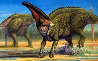 Самый большой динозавр хищник
