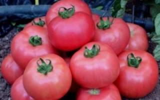 Пинк парадайз томаты