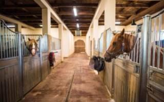 Денники для лошадей фото