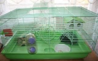 Хомячок уход и содержание в домашних условиях
