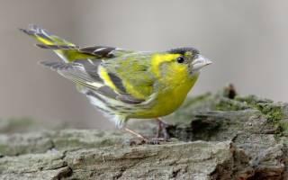 Самые быстрые птицы мира