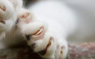 Как часто кошкам стригут когти