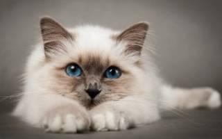 Кетостерил для кота