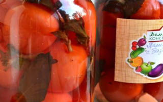 Помидоры с яблочным уксусом