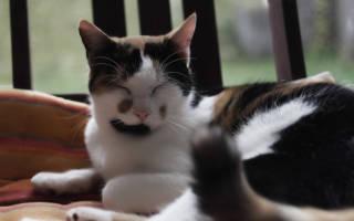 Капли фитекс для кошек