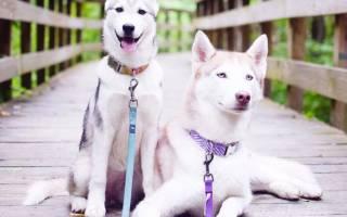 Породы самых красивых собак