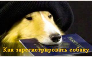 Как зарегистрировать собаку