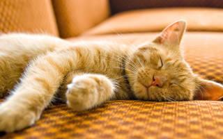 Кошка спит постоянно