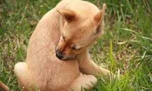 Препарат стронгхолд для собак