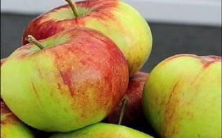 Россошанское вкусное яблоня описание