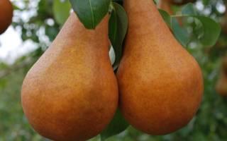 Чем подкормить грушу