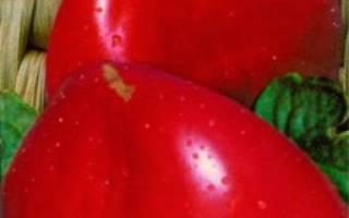 Орлиное сердце томат отзывы