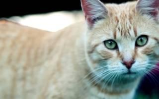 Какого завести кота