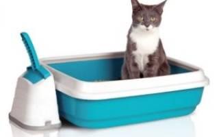 Размеры лотка для кошек