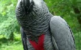 Поводки для попугаев