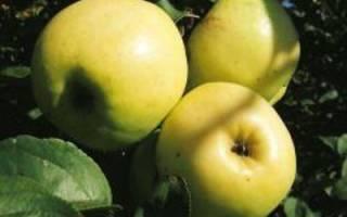 Аркад желтый яблоня описание