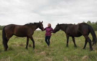 Приют для лошадей