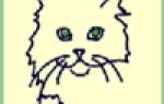 Кошка агрессивная после стерилизации