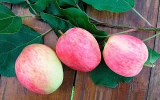 Яблоня аркадик описание фото