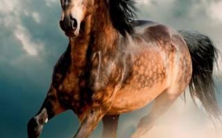 Красивые лошади мира