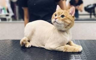 Зачем стричь кота