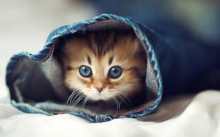 Как отличить котенка девочку от мальчика?
