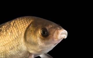 Сколько живет рыба