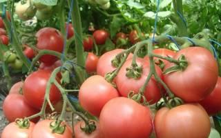 Сорт томата малиновый звон