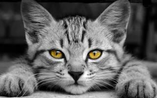 Команды для котов