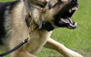 Собака защищает хозяина