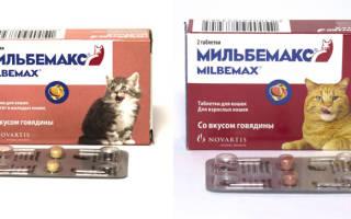 Как давать мильбемакс котенку