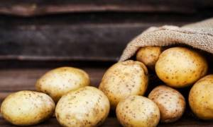 Сорт картофеля лорх