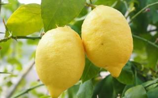 Лимон чем полезен