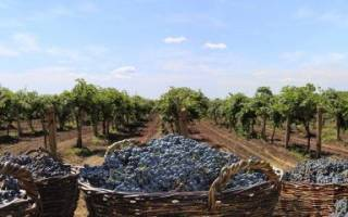 Вино не из винограда