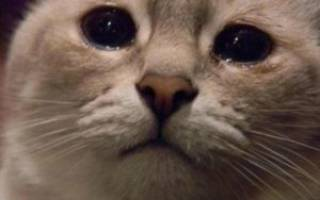 Глаза слезятся у кота