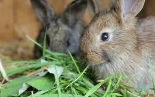 Можно давать кроликам редьку