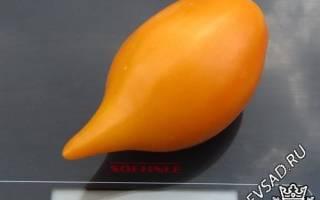 Буратино томат описание
