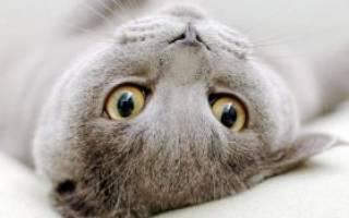 Вопросы про кошек